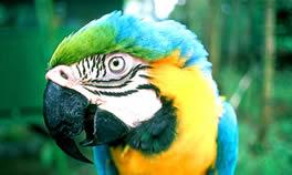 Ilha dos papagaios